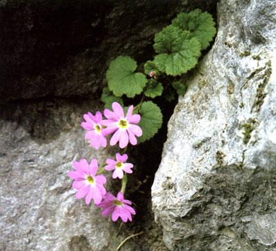 武甲山石灰岩地特殊植物群落